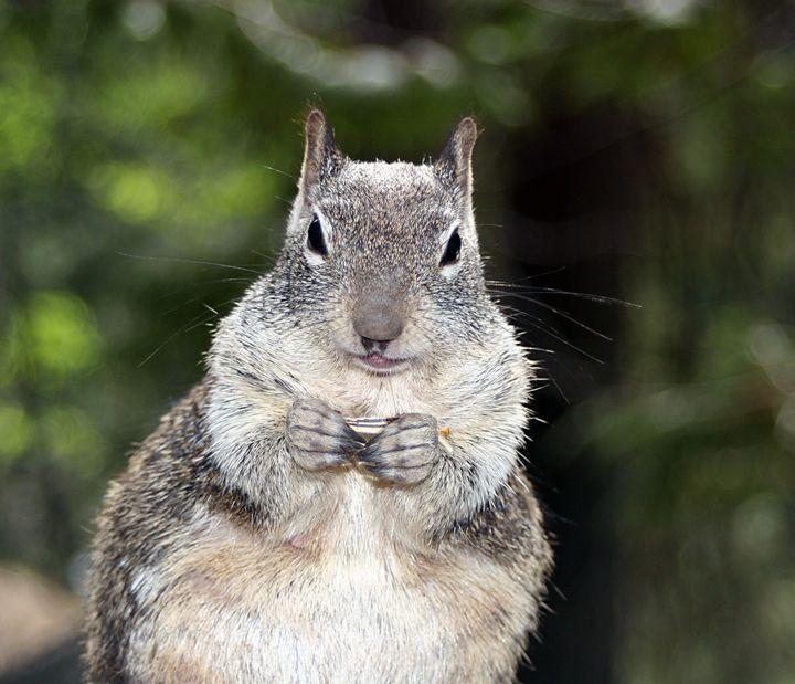 Yosemeti Squirrel - Visions of the World