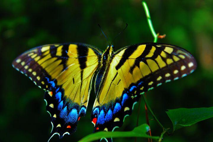 Forest Dweller - B.A. Butterfly Pics