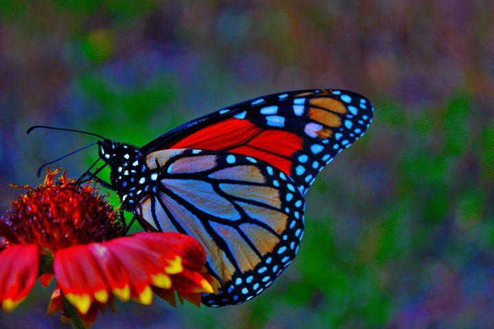 Neon Beauty - wild flower pics