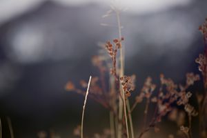 Rich Mountain Winter Bloom
