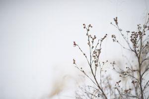Simplistic Winter Flower Buds
