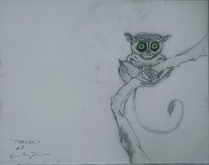 Tarsier Series Species 1: BlueGreen