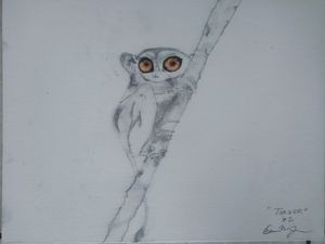 Tarsier Series Species 2: Gold Eyed