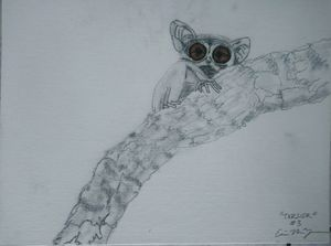 Tarsier Series Species 3: Dark Eyed