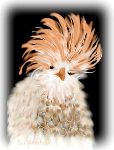 My Frizzle-Feathered Friend