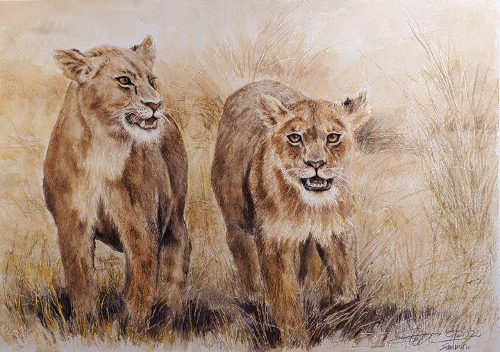 Lions of Samburu - Stewart Shang