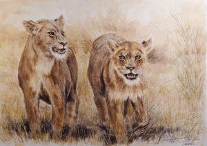 Lions of Samburu
