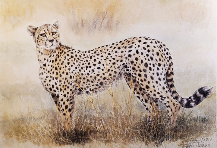 Cheetah on the lookout - Stewart Shang