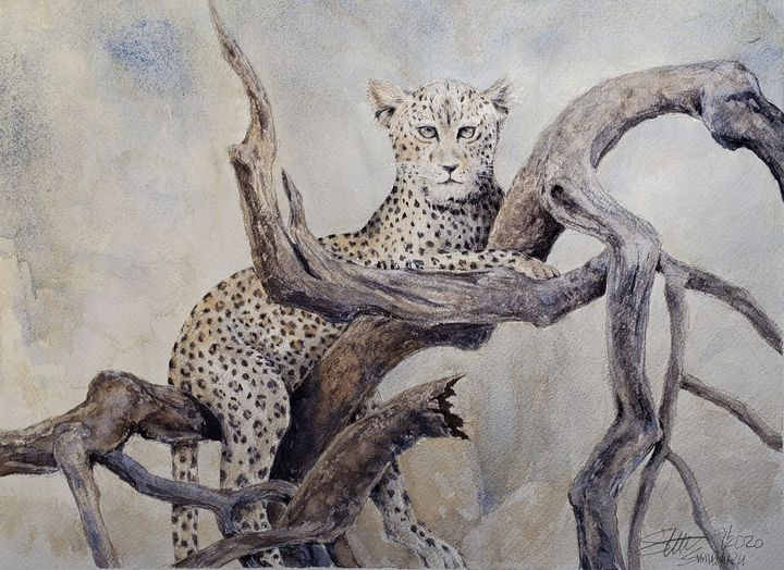 Leopard in tree - Stewart Shang