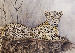 Leopard on Rock - Stewart Shang