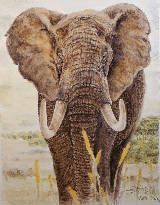Elephant from Lewa - Stewart Shang
