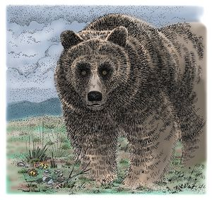 Grizzly on the Tundra
