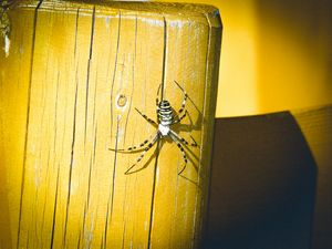 Wasp Spider on wood