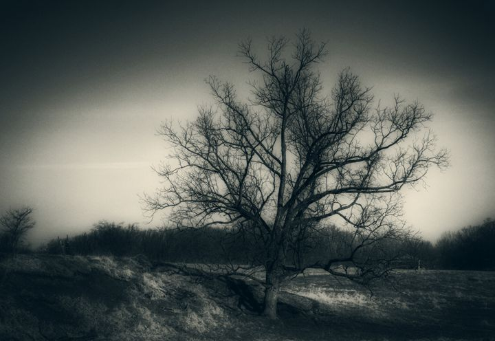 Old Tree - Stacia Morrison