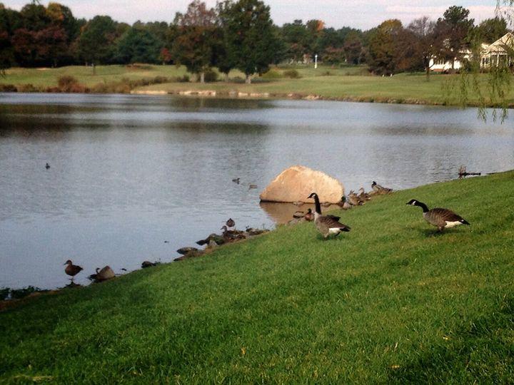 Ducks - Jessica