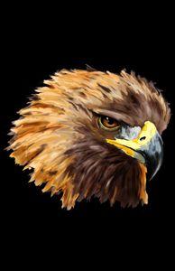 The Golden Eagle - Jayden McLeod