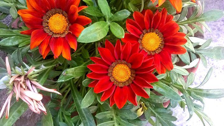 Flowers - Saroj Meher