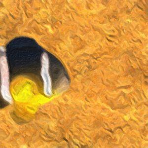 Fish in Orange See