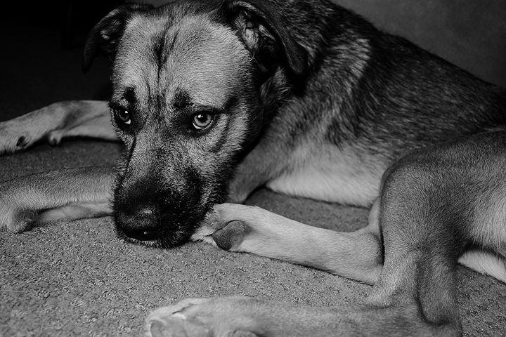 Black and Grey Dog Days - KRT Photography