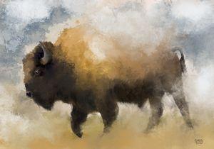 American Western Bison Print