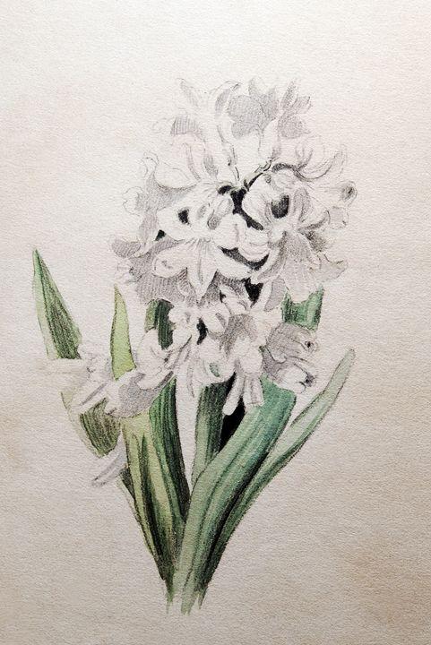 Spring Emerges - Robb Rokk