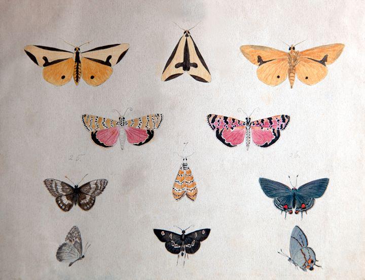 Butterflies - Robb Rokk