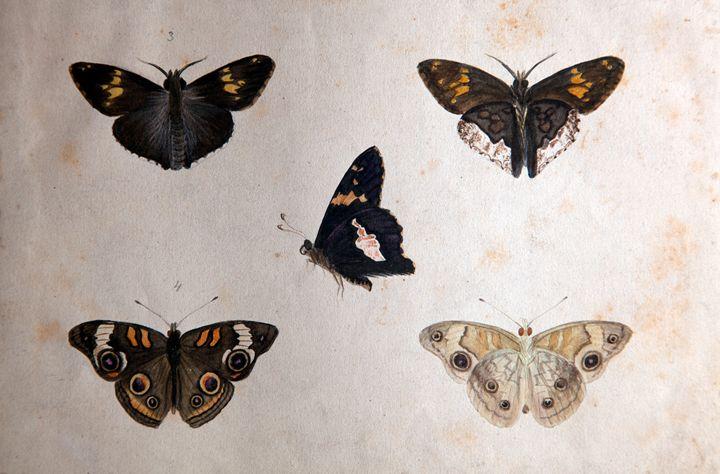Butterflies Shadowbox - Robb Rokk