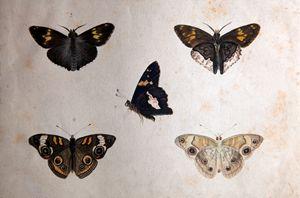 Butterflies Shadowbox