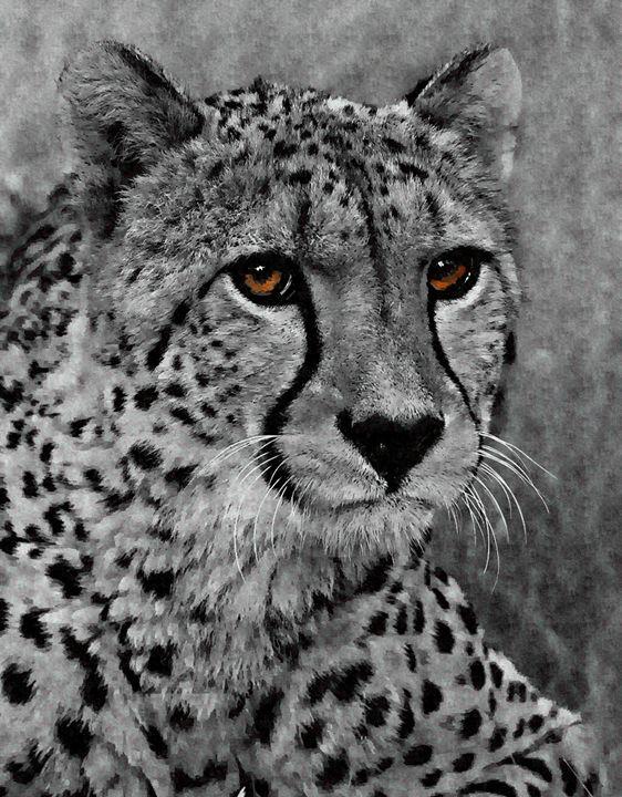 Cheetah - Philandlinda