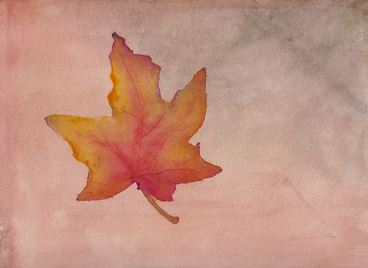 Maple Leaf in Autumn - Linda Ursin