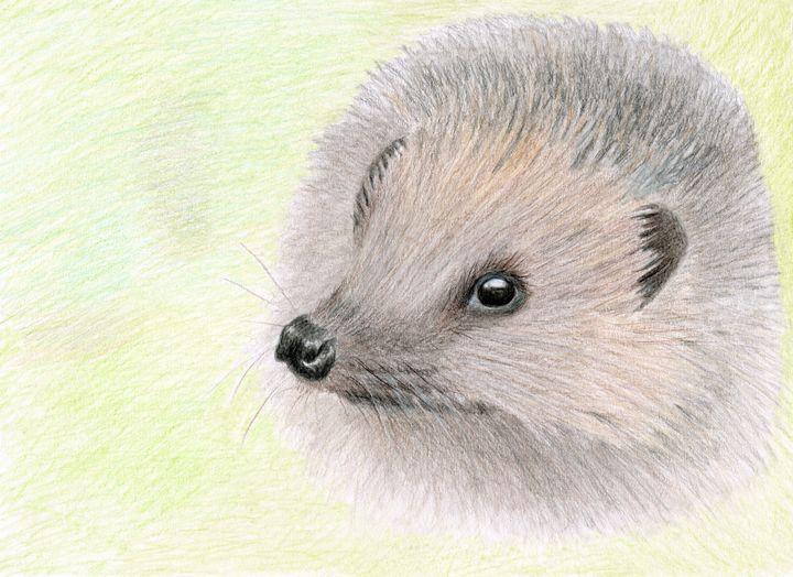 Young Hedgehog - Linda Ursin