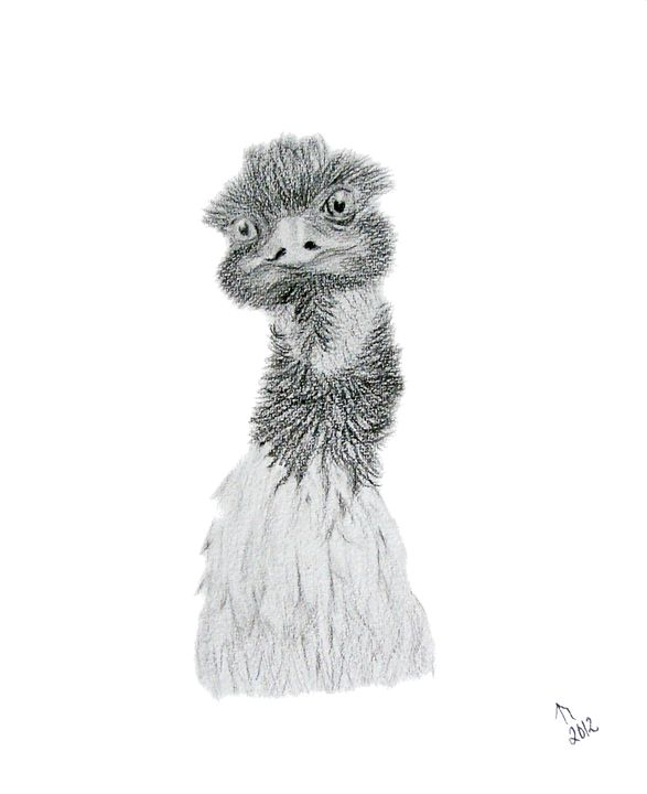 Endurance Emu - Linda Ursin