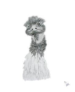 Endurance Emu
