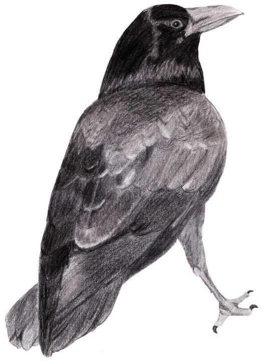 Will's Raven - Linda Ursin