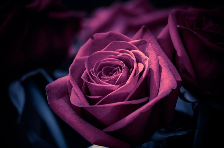 Glamour Roses - Jus4fundesigns
