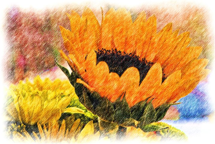 Colored Pencil Sunflower - Jus4fundesigns