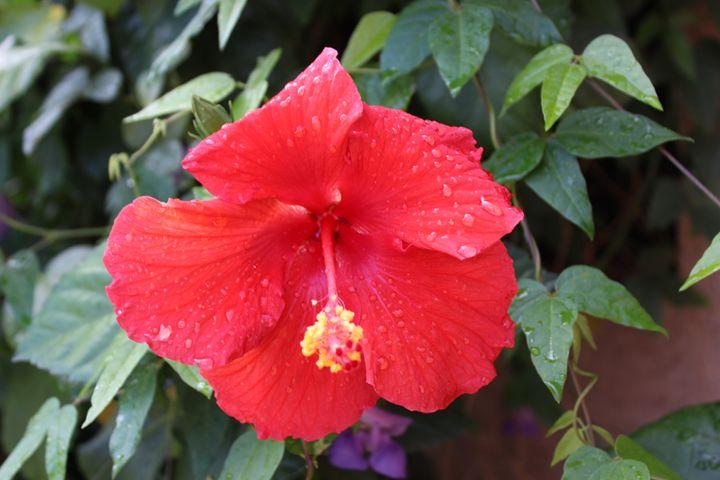 Arizona Rain - Nichole_V