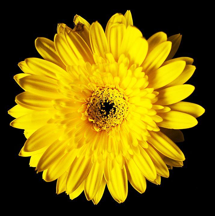 Yellow - J.O.Corradini