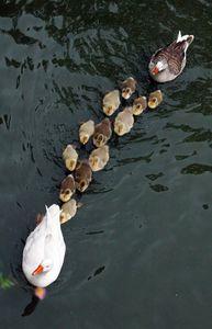 En fila
