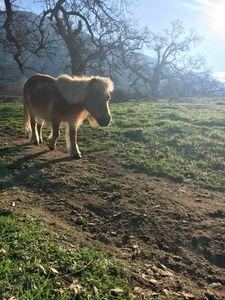 Minnie horse