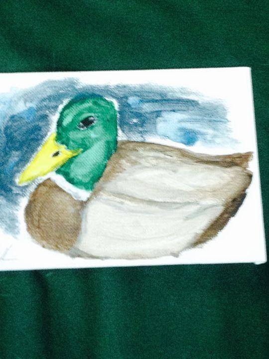 Mallard Duck - Flora and Fauna
