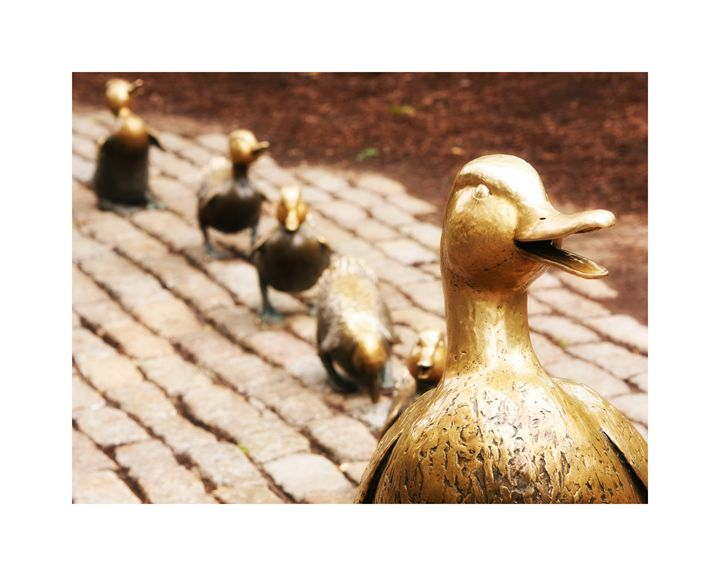 Make Way For Ducklings - Kristopher Ventresco