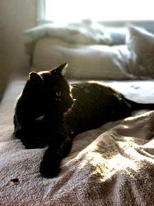 Black Cat in Sunlight