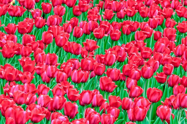 Spring Rhythms Of Red - Serhii Simonov photographer