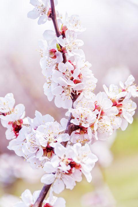 Blooming in the garden - Serhii Simonov photographer