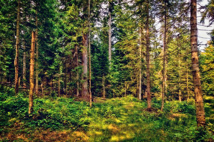 Carpathian forest - Serhii Simonov photographer
