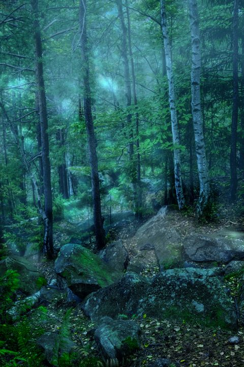 Mystical forest - Serhii Simonov photographer