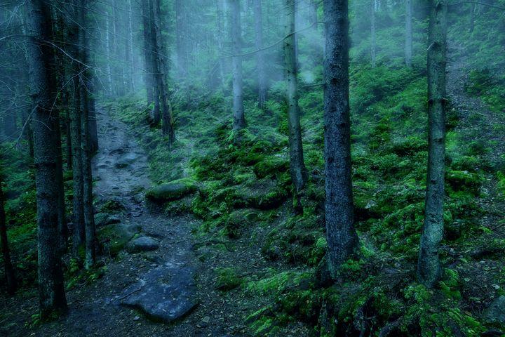 Mystical forest - Serhii Simonov photographer