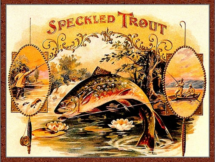 Speckled Trout - paintings
