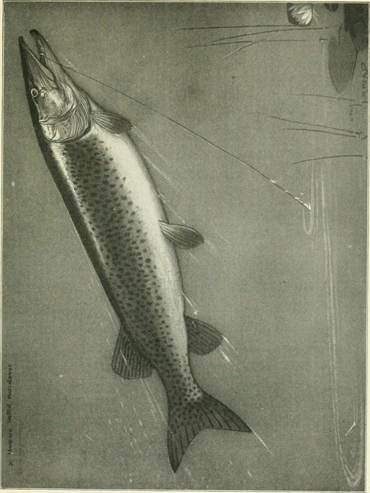 Brown Trout - paintings
